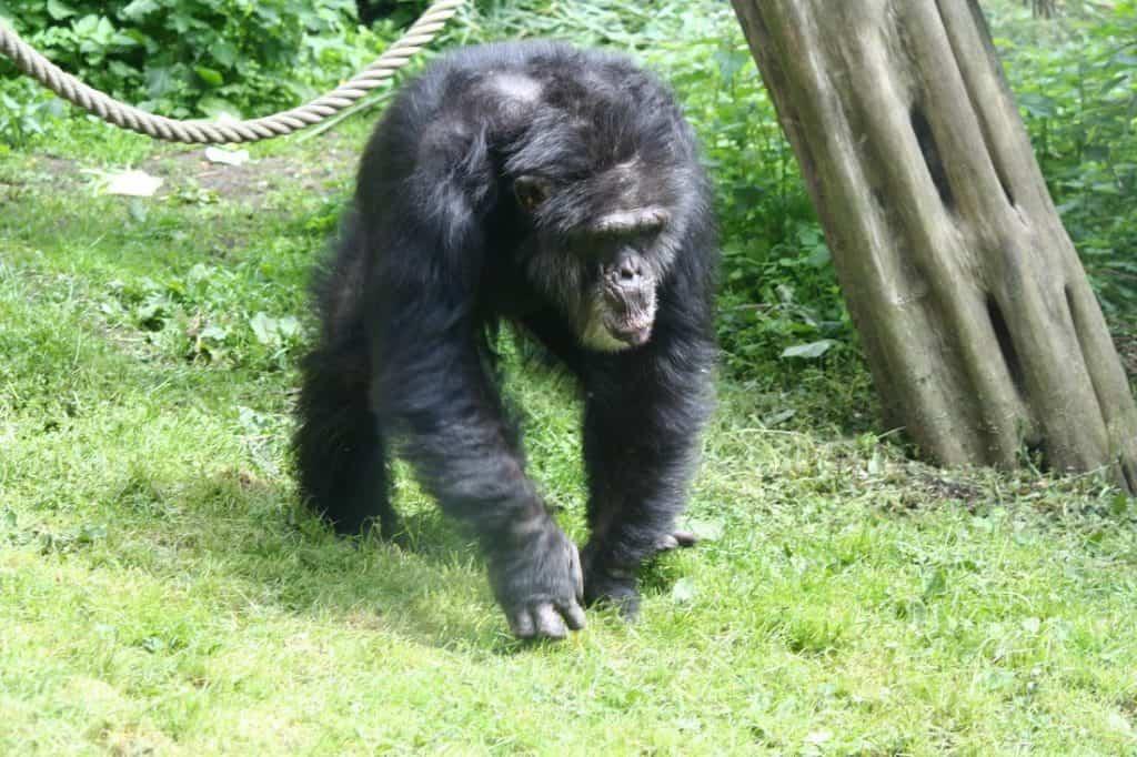 edinburgh zoo monkey