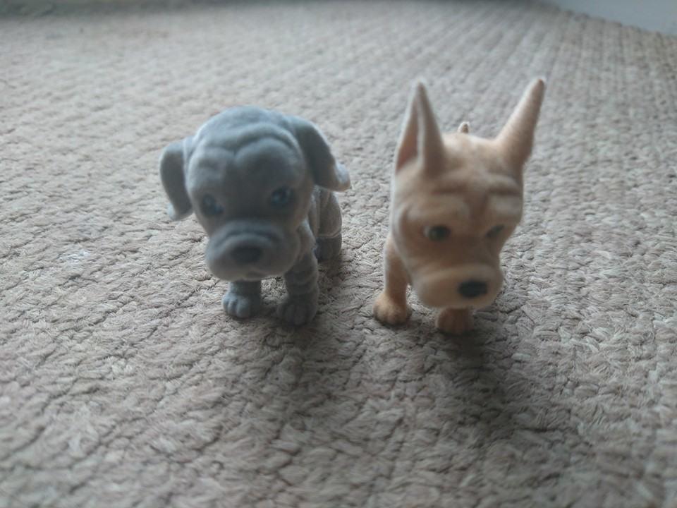 puppy in my pocket puppies