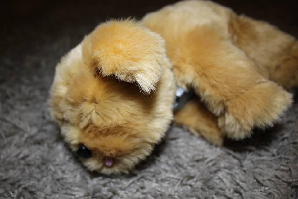 snuggles-asleep