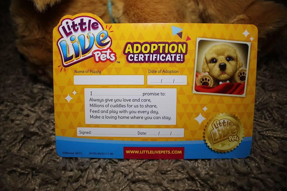 snuggles-certificate