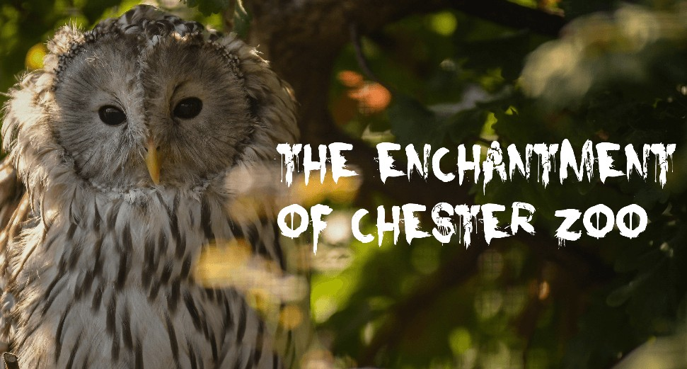the-enchantment-of-chester-zoo